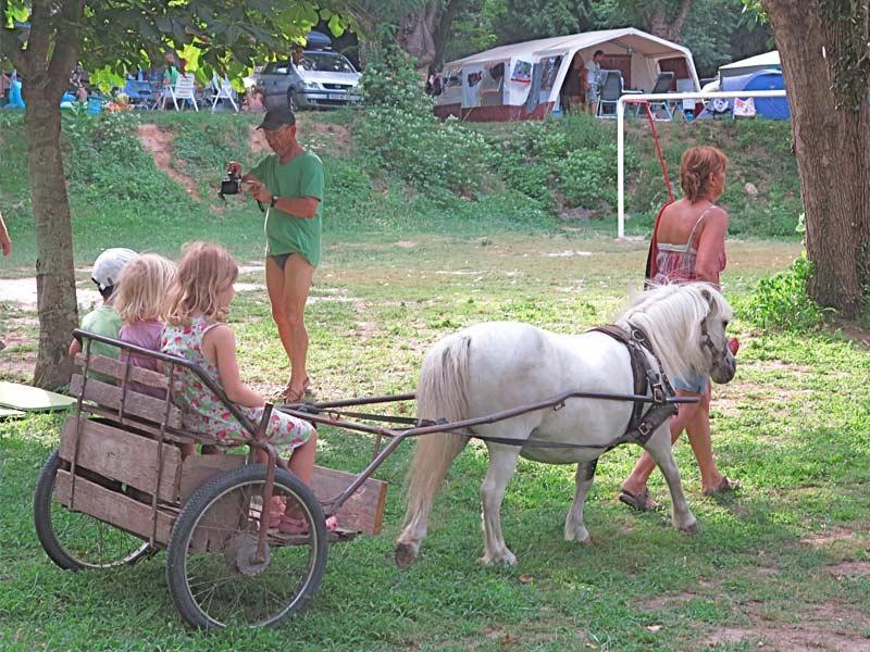 poney avec sa calèche