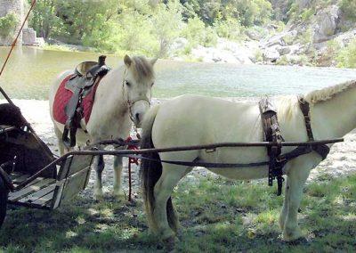 Balade à poney et calèche